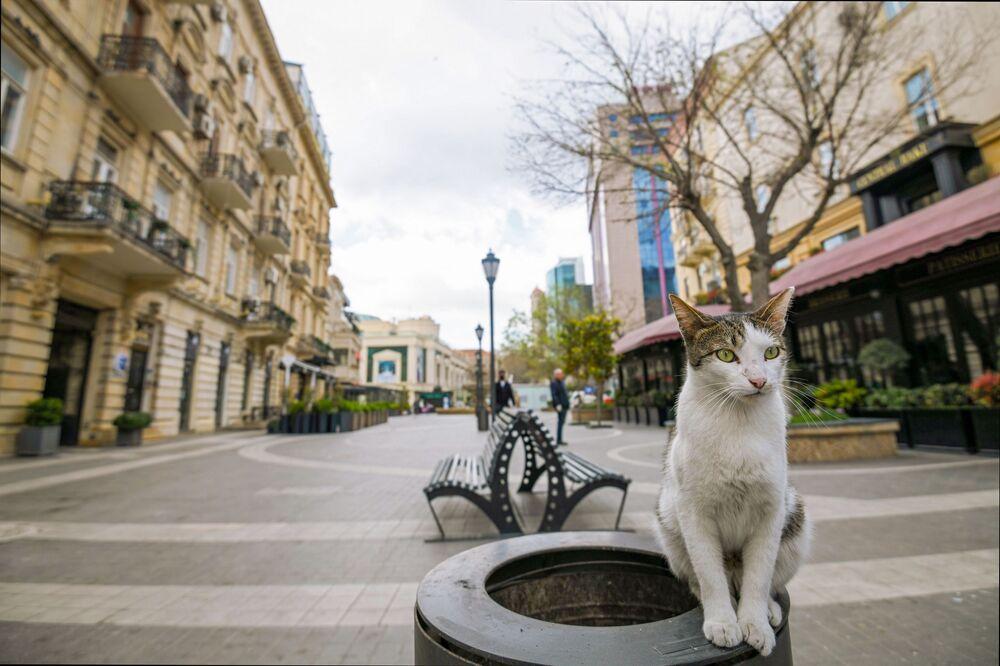 Kočka na prázdné ulici. Baku, Azerbajdžán