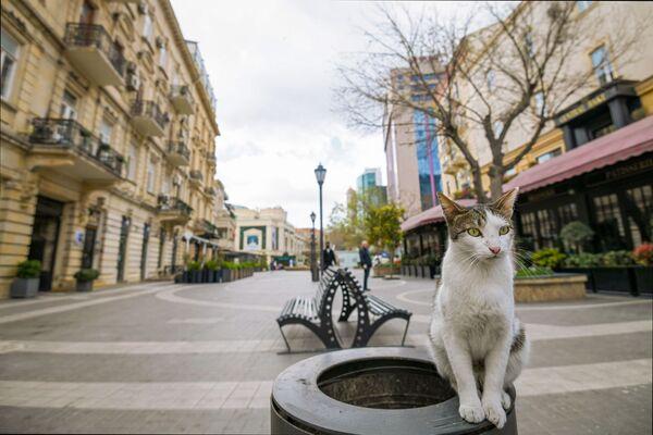 Kočka na prázdné ulici. Baku, Azerbajdžán  - Sputnik Česká republika