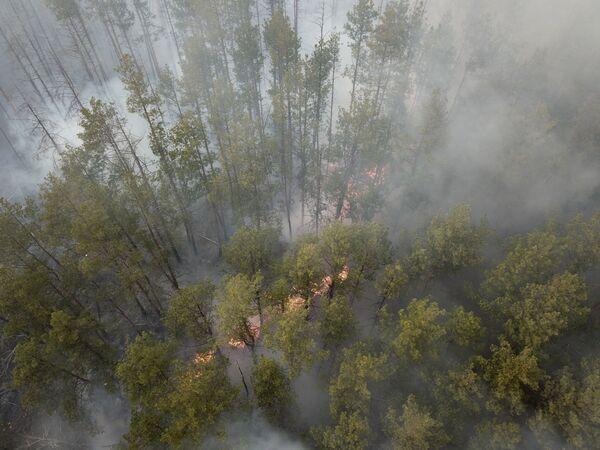 Hořící les poblíž vesnice Volodymyrka v Černobylské uzavřené zóně - Sputnik Česká republika