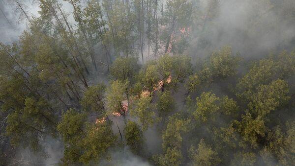 Požár v uzavřené zóně Černobylské jaderné elektrárny  - Sputnik Česká republika
