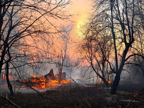 Hořící les poblíž vesnice Rahivka v Černobylské uzavřené zóně - Sputnik Česká republika