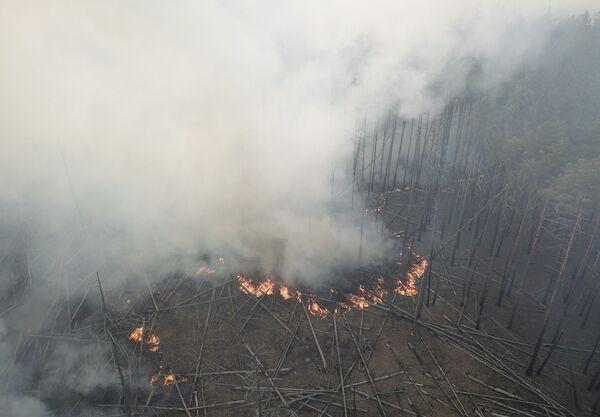 Hořící les v Černobylské uzavřené zóně - Sputnik Česká republika