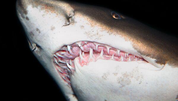 Zuby žraloka - Sputnik Česká republika
