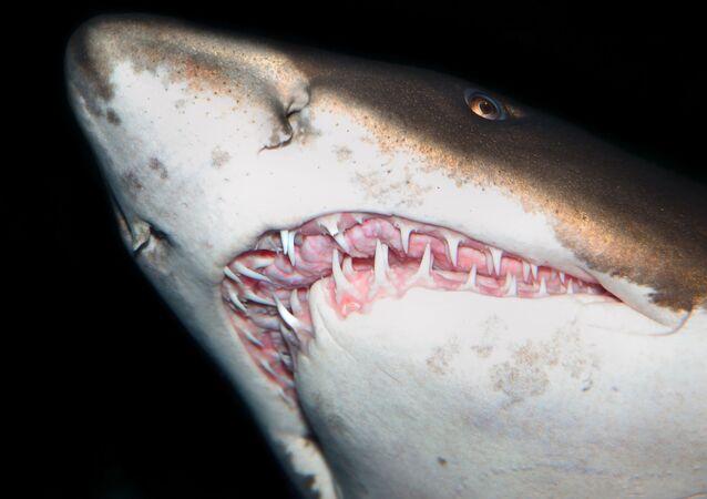 Zuby žraloka