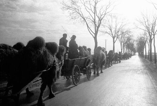 Jeden z prvních výstřelů na říšský sněm provedla vojenská posádka, ve které byli velbloudi, kteří přišli do Berlína ze Stalingradu. - Sputnik Česká republika