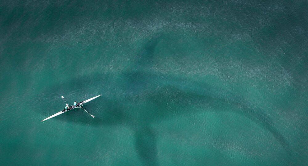 Silueta žraloka ve vodě. Ilustrační obrázek