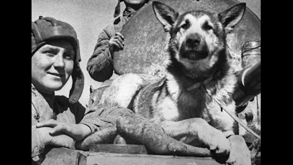 Málo známí hrdinové Velké vlastenecké války. Psi, kteří bránili vlast až do samého konce - Sputnik Česká republika