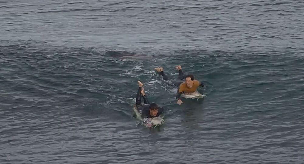 Surfaři plavou pryč od žraloka