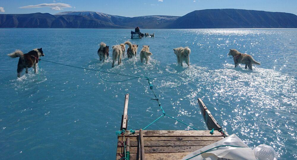Psi táhnou saně přes grónský led pokrytý vodou