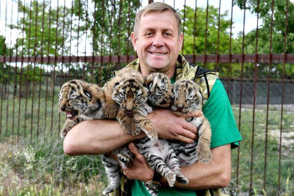 Ředitel safari-parku Tajgan Oleg Zubkov s novorozenými mláďaty tygra amurského.  - Sputnik Česká republika