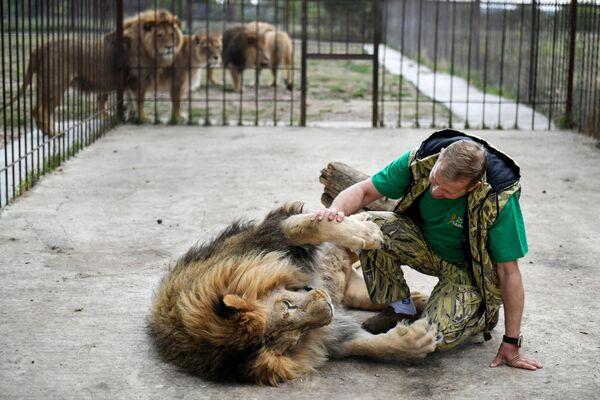 Ředitel krymského safari-parku Tajgan Oleg Zubkov ve voliéře se lvem.  - Sputnik Česká republika