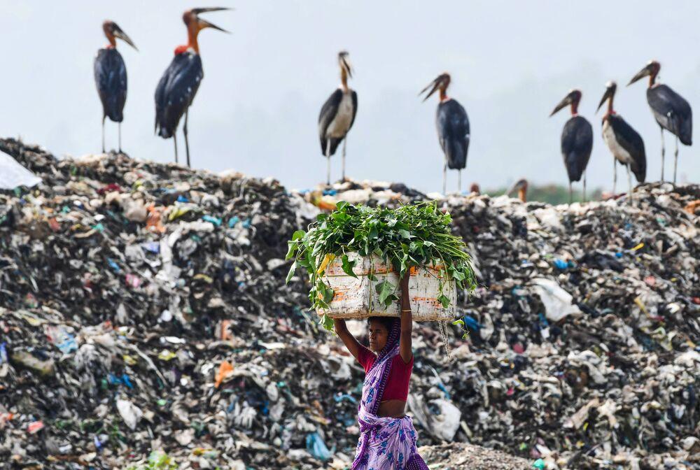 Žena nese krmivo pro svůj dobytek kolem skládky odpadu. Indie