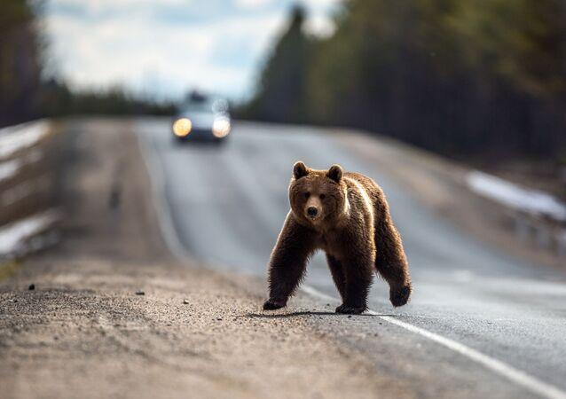 Medvěd. Ilustrační foto.