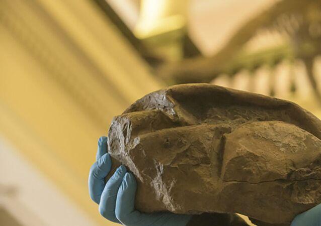 Zkamenělina z Antarktidy