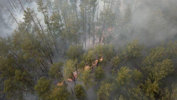 Požár v uzavřené černobylské zóně - Sputnik Česká republika