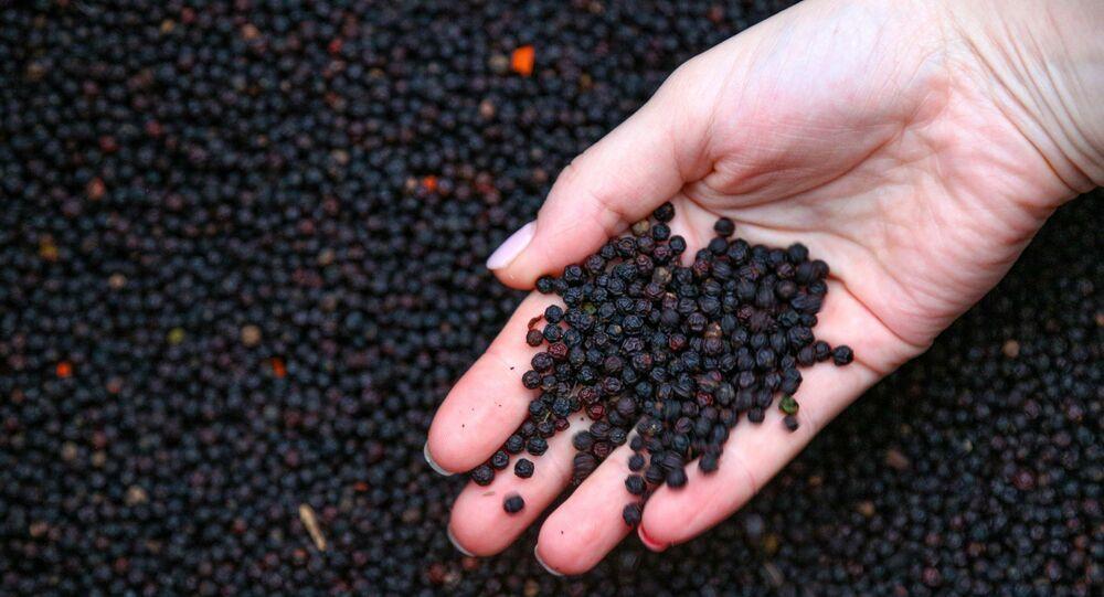 Černý pepř z Vietnamu