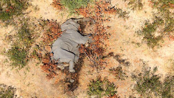 Uhynulý slon v Botswaně - Sputnik Česká republika