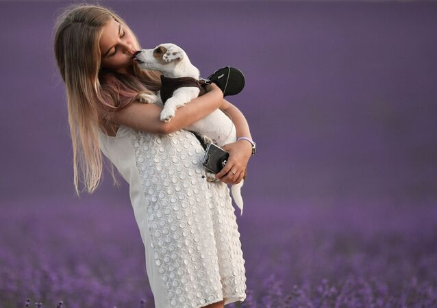Dívka se psem na levandulovém poli na Krymu