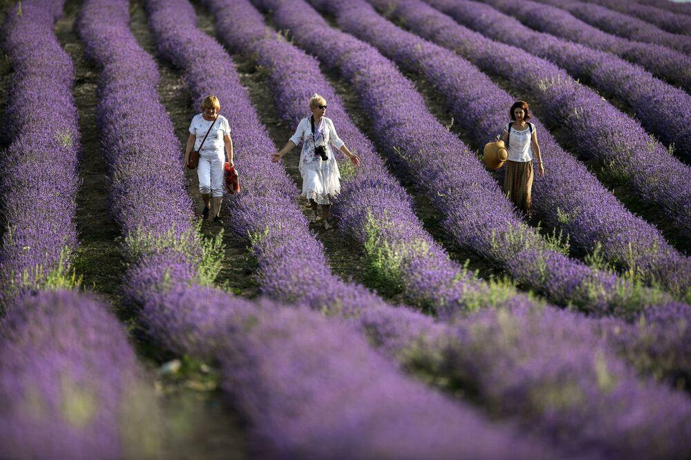 Ženy na levandulovém poli na Krymu