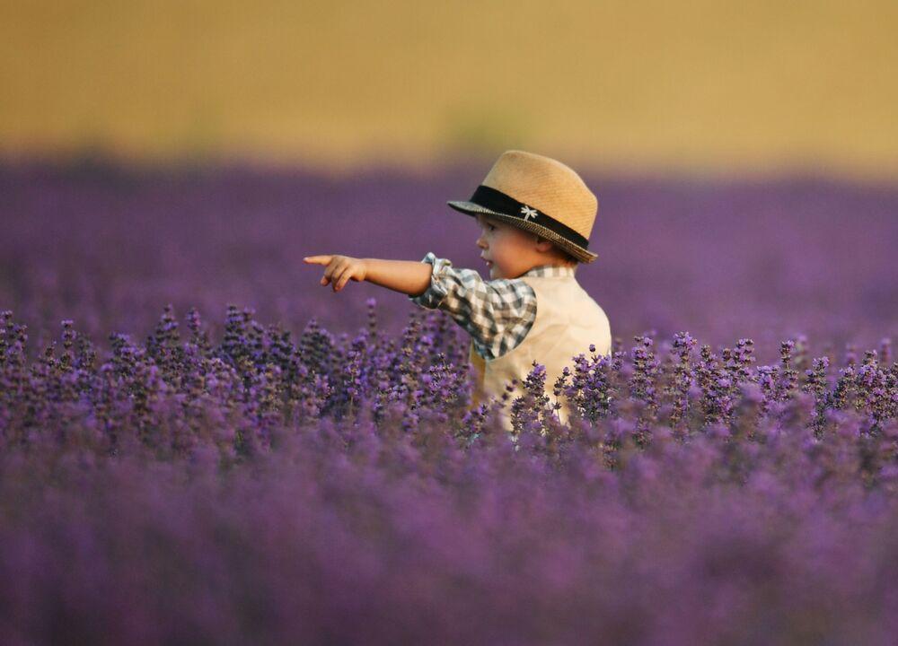 Chlapec na levandulovém poli na Krymu
