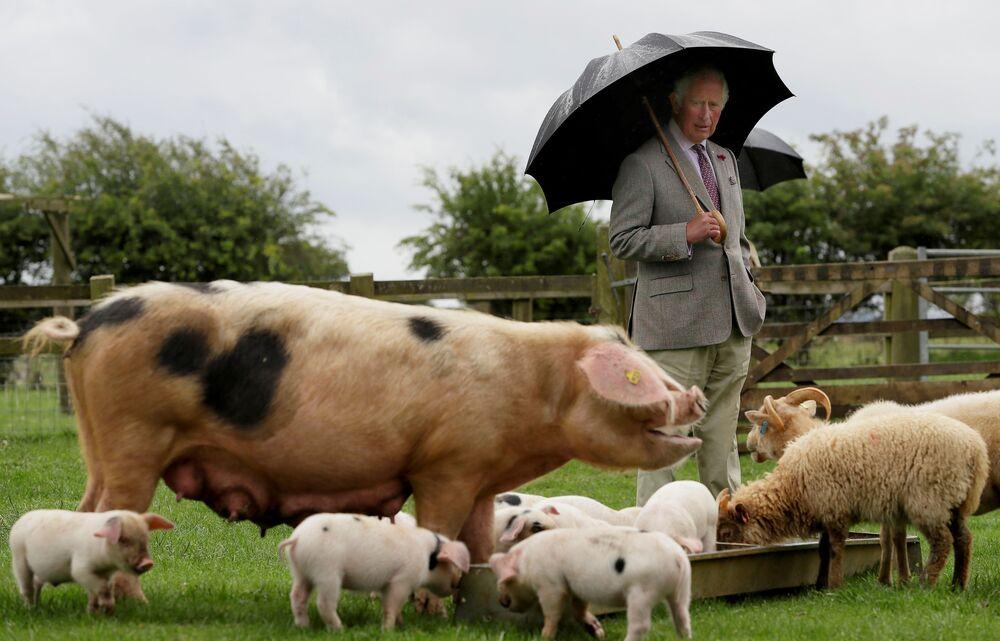 Prince Charles během návštěvy farmy Cotswold Farm Park, Spojené království