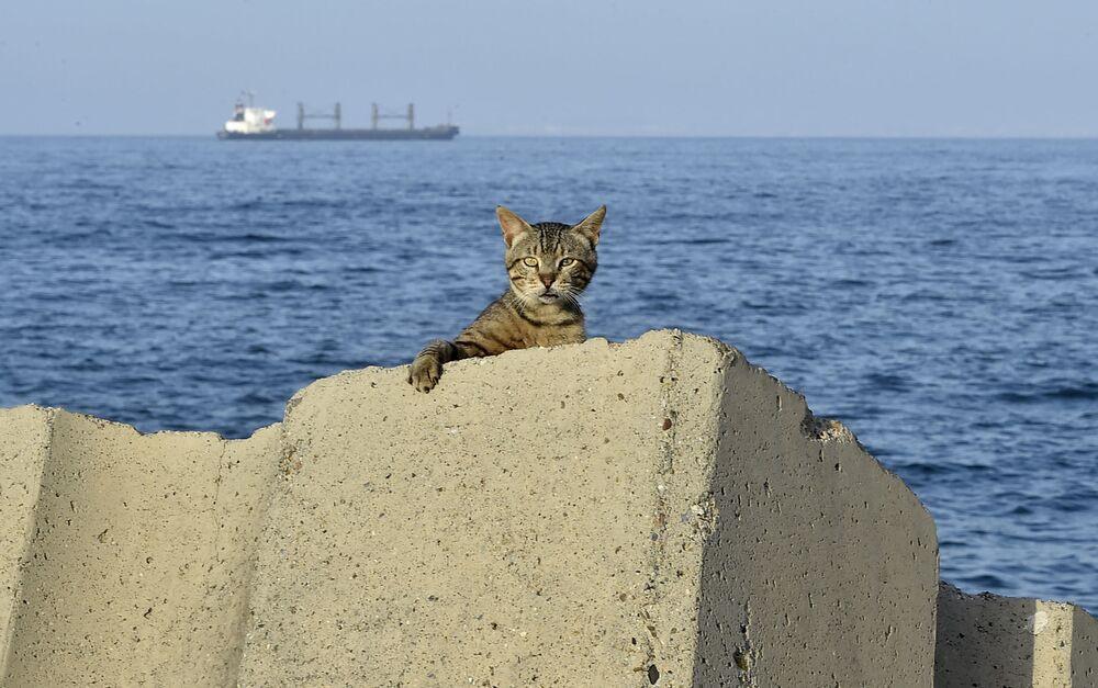 Kočka na nábřeží během zákazu vycházení uloženého kvůli epidemii koronaviru v alžírském hlavním městě