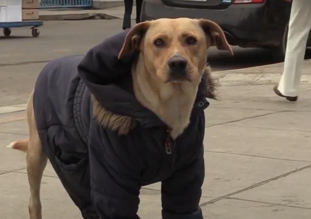 Už několik dní tento pes u nemocnice čeká na svého majitele nakaženého koronavirem