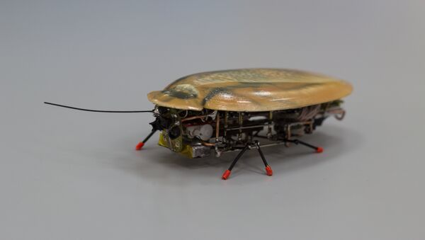 Robot-rozvědčík v podobě švába - Sputnik Česká republika
