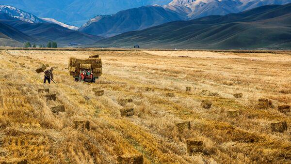 Čínský farmář sklízí úrodu - Sputnik Česká republika
