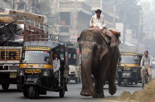 Hustý provoz v indickém Amritsaru - Sputnik Česká republika