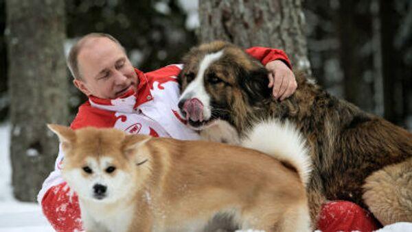 Bulharský ovčák Buffy a akita inu Jume darovaný úřady japonské prefektury Akita - Sputnik Česká republika