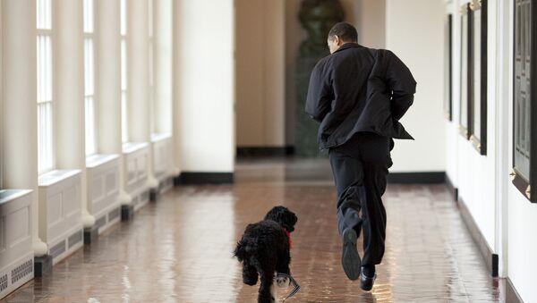 V rodině Baracka Obamy žije Bo – portugalský vodní pes - Sputnik Česká republika