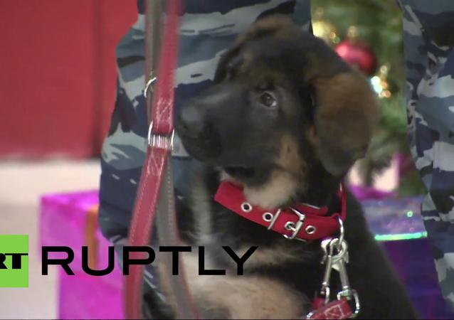 Policejní štěně Dobryňa si zahrálo s vodítkem během ceremonie na francouzském velvyslanectví