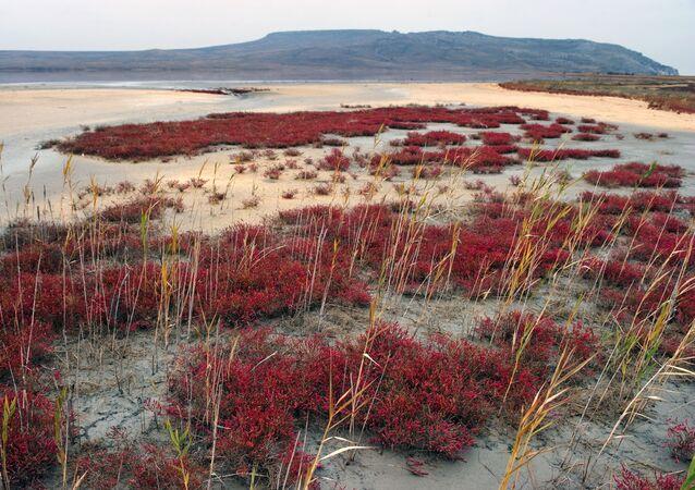 Tam, kde na jaře byla voda, vzniká na podzim slaná poušť, přes kterou se dá dostat k vodě