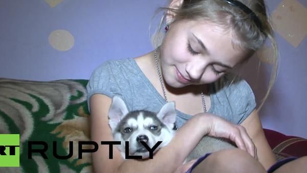 Rusko: 12letá dívka dostala od Putina jako dárek na Silvestra štěně husky - Sputnik Česká republika