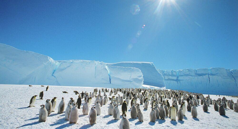 Císařští tučňáci v Antarktidě