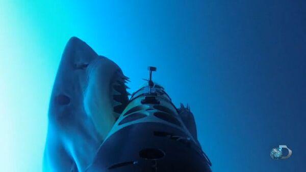 Útoky žraloků na železné tuleně byly natočeny na video - Sputnik Česká republika