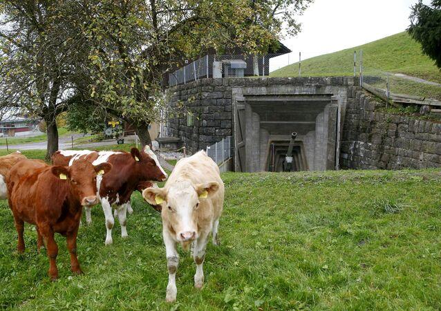 Druhý život bunkrů ve Švýcarsku
