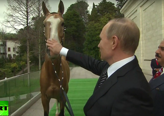 Putin daroval králi Bahrajnu závodního koně