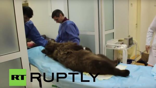 Unikátní oční operace medvěda v ruské nemocnici - Sputnik Česká republika