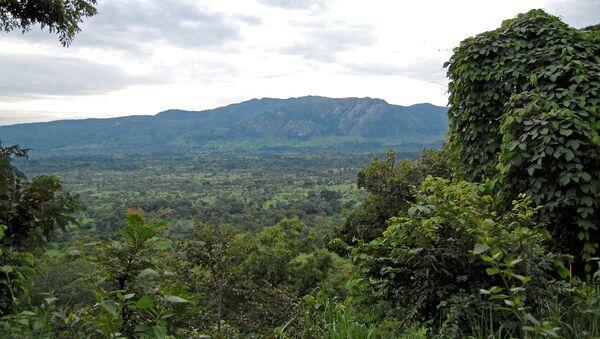 Džungle v Nigérii - Sputnik Česká republika