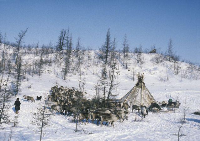 Tábořiště chovatelů jelenů