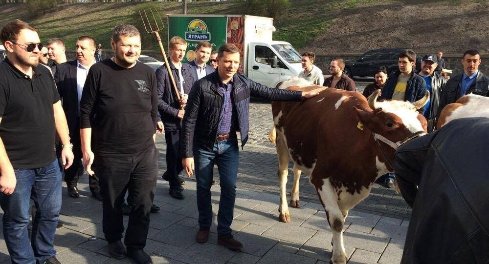 Ljaško chytal krávy na demonstraci před úřadem vlády na Ukrajině