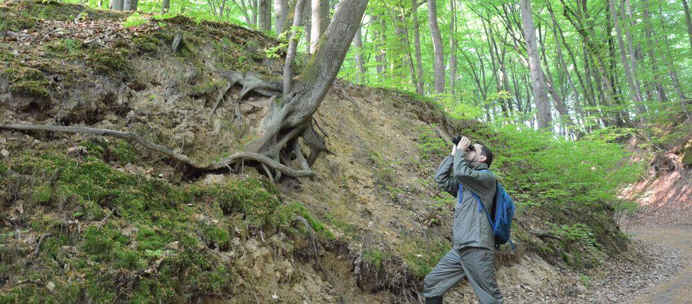 Les. Ilustrační foto