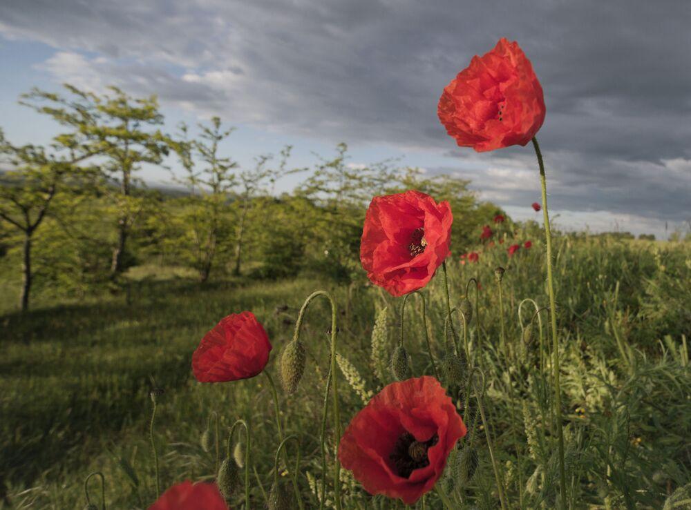 Květnový Krym