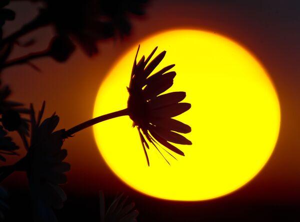Květnový Krym - Sputnik Česká republika