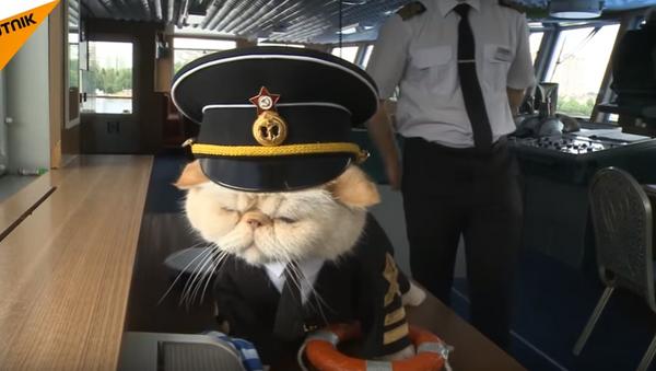 Kočky na palubě! Chlupatí námořníci vás vezmou na perrrfektní plavbu - Sputnik Česká republika