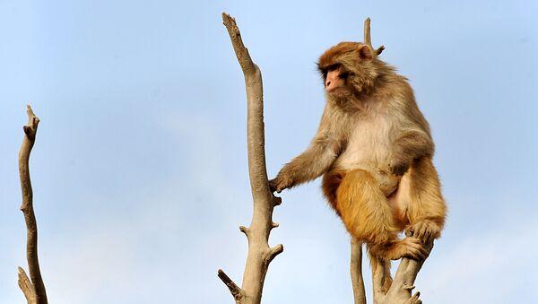 Opice - Sputnik Česká republika