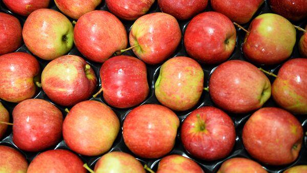 Polská jablka - Sputnik Česká republika