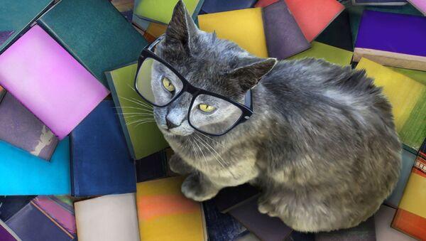 Kočka v brýlích - Sputnik Česká republika